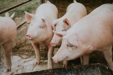 Frifundet i sag om dyretransport