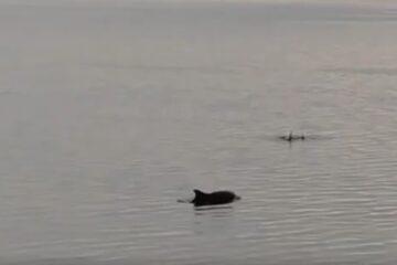 Delfiner hyggede sig med Næssie
