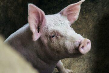 En anderledes sag om dyrevelfærd