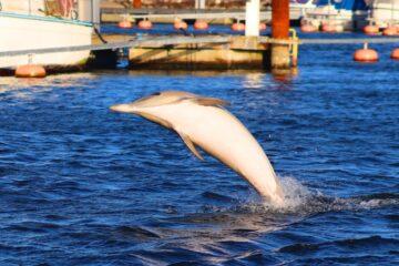 Delfinen fra Sundby er død