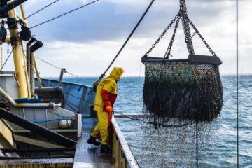 Ministermøde redder ikke muslingejobs på Mors