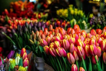 Intet tulipansalg fra Lions Club i år