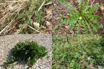 Naturklumme: Nu kan mange planter spises